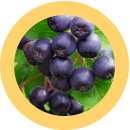 ultra detox cleanse ingredients acai berry fruit extract